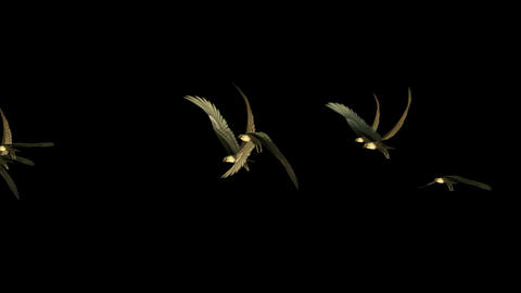 flock of birds fly over at night,eagle Stock Video Footage