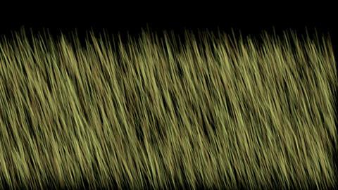 grassland Stock Video Footage