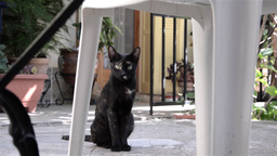 Black cat with spots that sit and watch hidden under a white plastic chair in th Footage
