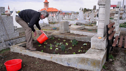 Man planted flowers on the grave of relatives of his Footage