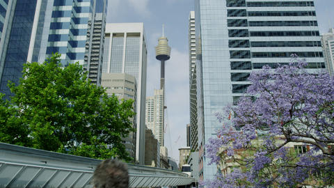 Spring time in Sydney in 4K Footage