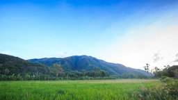 Rice Field against Green Hills above Blue Sky Footage