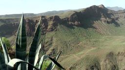 Spain Gran Canary Fataga 002 volcanic rocks and an agave Footage