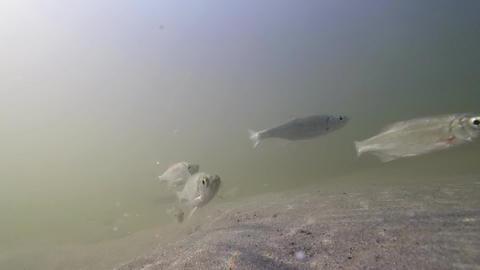 Underwater Fish Background Video