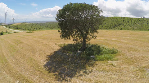 Untouched sole tree and endless green landscape, rule of nature law on planet Footage