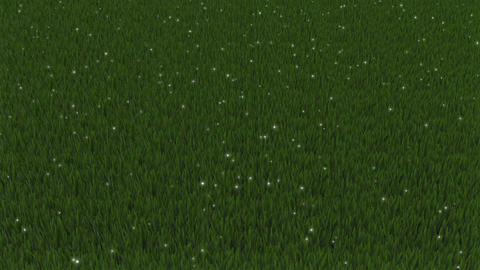 Particles of light spreading in the grassland Animation