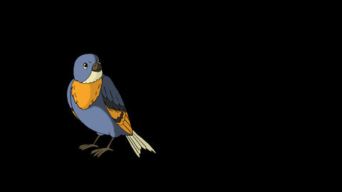 Blue Bird Came Flying Animation