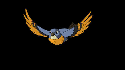 Blue Bird Flies. Front View Animation