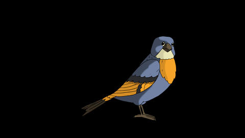 Blue bird jumping Animation