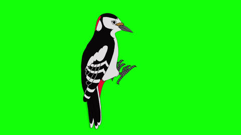 Great Spotted Woodpecker Animation