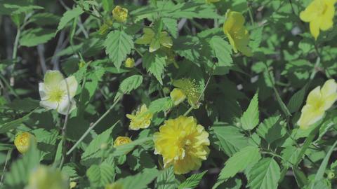 yellowflower c-log mark4 Footage