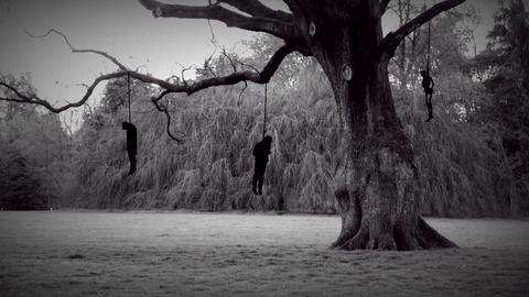 Dark hangman tree