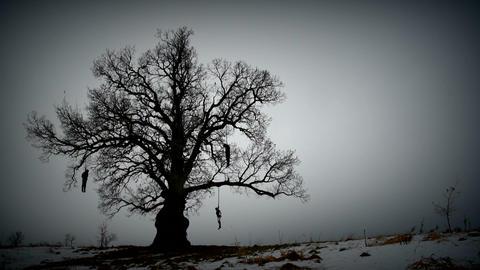 Hangman tree gloomy Footage