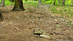 forest - steadicam walking in forest - shot at the ground Footage
