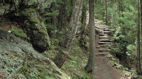 Footpath to stairs in forest Footage