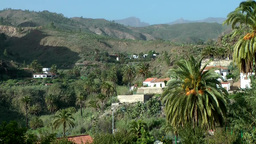Spain Gran Canary Fataga 030 palm trees and houses in valley Footage