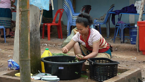 Woman sorting and washing greenery Live Action