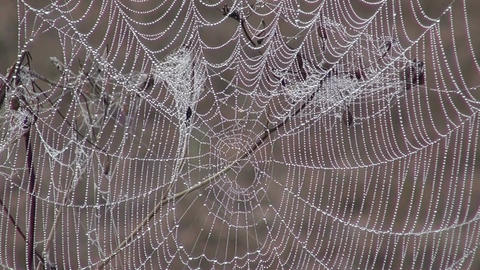 Dew covered cobweb Footage