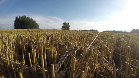 Landscape with freshly harvested wheat field, time lapse 4k Footage