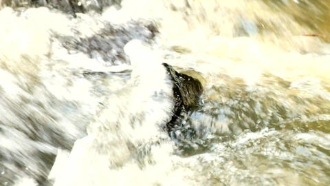 Slow motion. Rapid stream with huge of crystal water....影片素材
