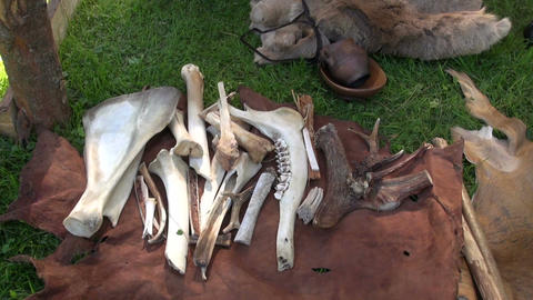 Bones and horns on fur Footage