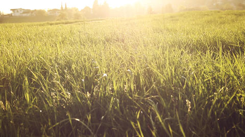 Shiny high grass in front of swiss village in evening sunlight Footage