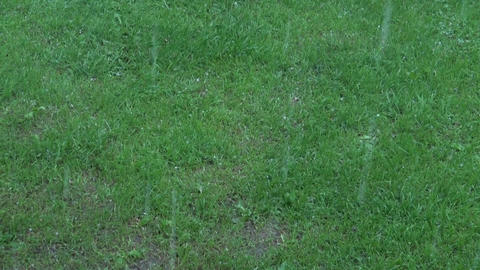 Rain hail shower falling on lawn Footage