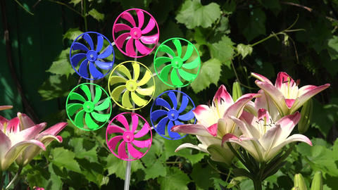 Beautiful lilies in summer garden and windmill toy Footage