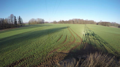 Spring sunrise time trees and electrical pylon shadows on dewy wheat field Footage