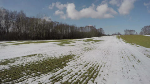 early spring snow on wheat field with green sprouts after wintering, 4K Footage