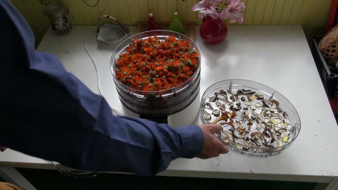 Herbalist drying calendula in electrical herb dryer Footage