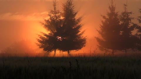Sun rising through trees Footage