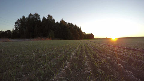 Sunrise in the fields in autumn, time lapse 4K Footage