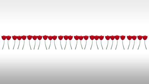 Line of tulips blossoming Animation