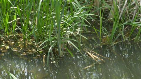Water Plants near Shore Footage