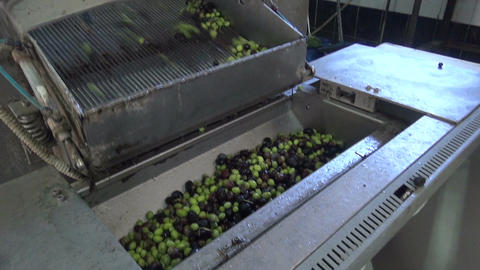 Washing Olives in the Olive Press 3 Footage