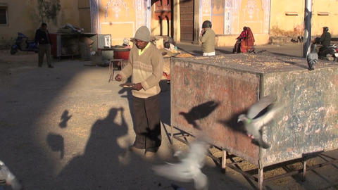 Jaipur, Rajasthan, India, December 2012 - men feeding doves in city square Footage