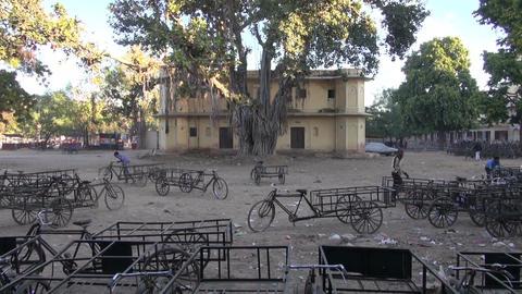 Jaipur, Rajasthan, India, December 2012 - old ficus tree in yard Footage