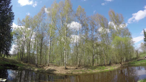 Landscape with a pond by the forest, time lapse 4K Footage