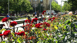 garden with red roses - people sit on benches in background Footage
