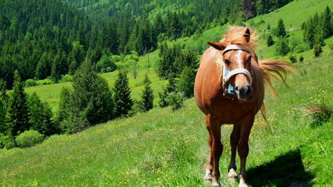 Horse on summer meadow. Amazing sunny day in mountains Live Action