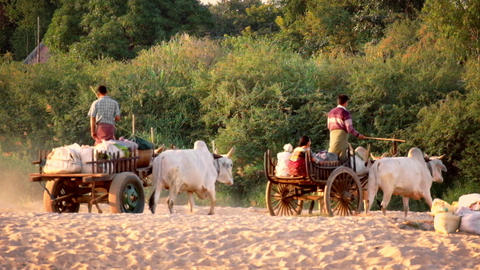 Burmese rural people riding on wooden wagon drawn by asian buffaloes. Myanmar Footage