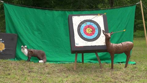 Arrows hitting targets Footage