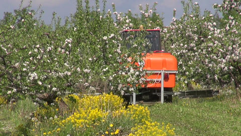 agriculture tractor spray fertilize industrial apple garden in spring Footage