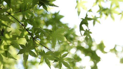 tree Filmmaterial