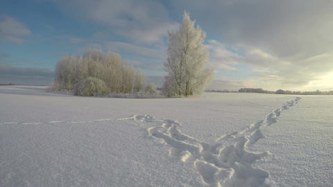Farmland landscape with trees and feet trail through snowy field, time lapse 4K Footage