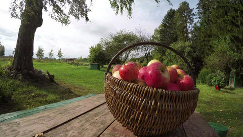 Wicker basket full of ripe apples on table outside, time lapse 4K Footage