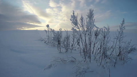Sun shining over grass stalks in winter's field, time lapse 4K Footage