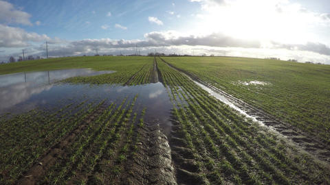 Spring water puddles on young green wheat field, time lapse 4K Footage