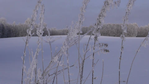 Landscape with fields and forest in winter Footage